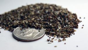 Wildflower Seed Embedded Handmade Paper